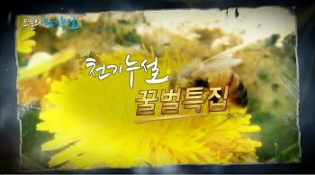 MBN 천기누설 - 꿀벌특집에 소개된 봉교(프로폴리스)의 놀라운 효능