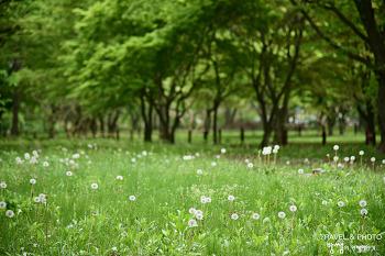 경주 계림, 초록빛 가득한 숲속에서의 힐링