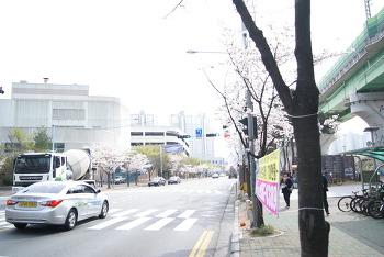 양산 지하철역 주변 벗꽃