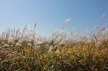 가을을 느끼려면 - 하늘공원
