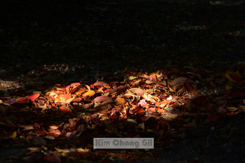 가을을 보내기 전에