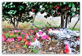 동백꽃 4ㅡ7