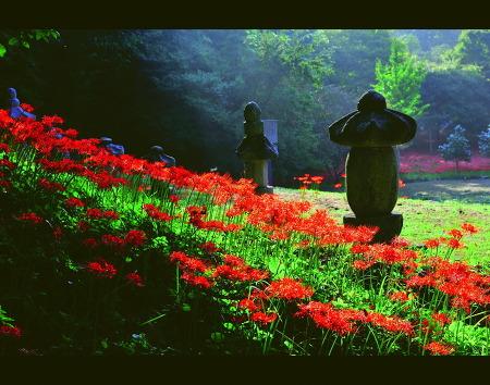 한사화 고양시 꽃사진 입선  10월
