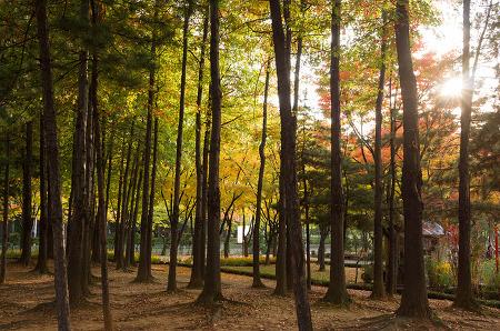 181022 _ 가을이 간다. 부천중앙공원