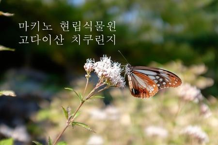 [고치여행] 마키노 현립식물원 , 고다이산 치쿠린지