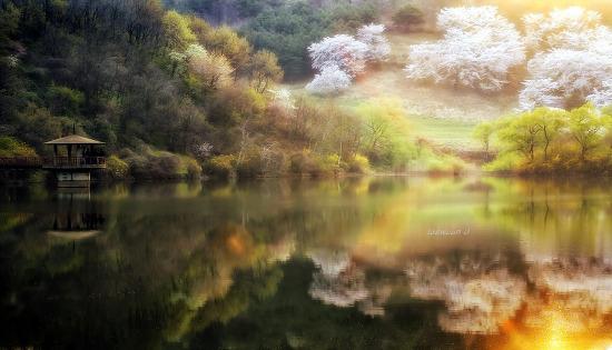 용비지의 봄