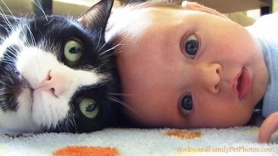 아기와 고양이