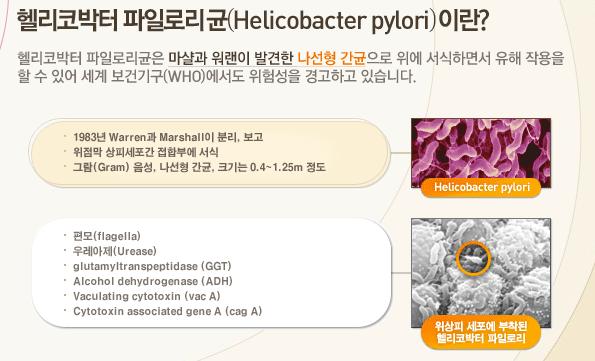 헬리코박터 파일로리균 정의, 특징 설명
