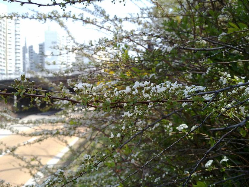 짙어가는 대구의 봄