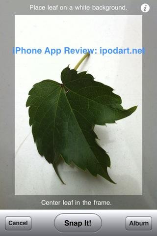 아이폰 아이패드 식물 잎 이름 찾기 사진 Leaf Snap