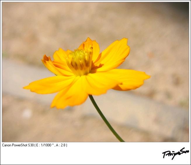 08_0859_IMG.JP
