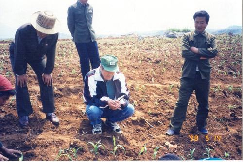 북한방문 옥수수시험재배지역