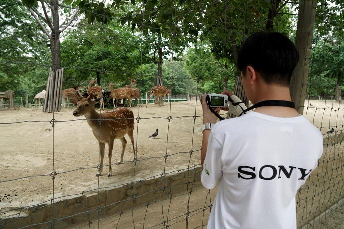 소니코리아는 지난 11일 초록우산 어린이재단과 함께 서울 지역 소외계층 청소년 20명을 초청, '제 11회 소니코리아 에코 사이언스 스쿨' 행사를 열었다. 이날 참가 학생들이 '서울숲'에서 '숲해설전문가'가 들려주는 생태 교육, 사슴 먹이주기 체험 등에 참여하고, 알파아카데미에서 배운 내용을 바탕으로 직접 카메라를 들고 사진을 촬영하였다.