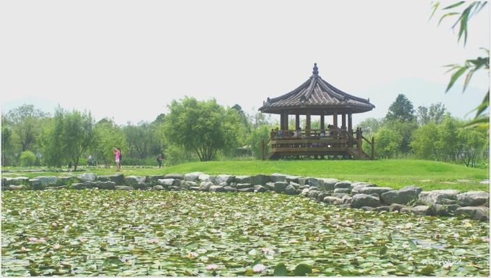 삼락공원 연지(蓮池) 풍경