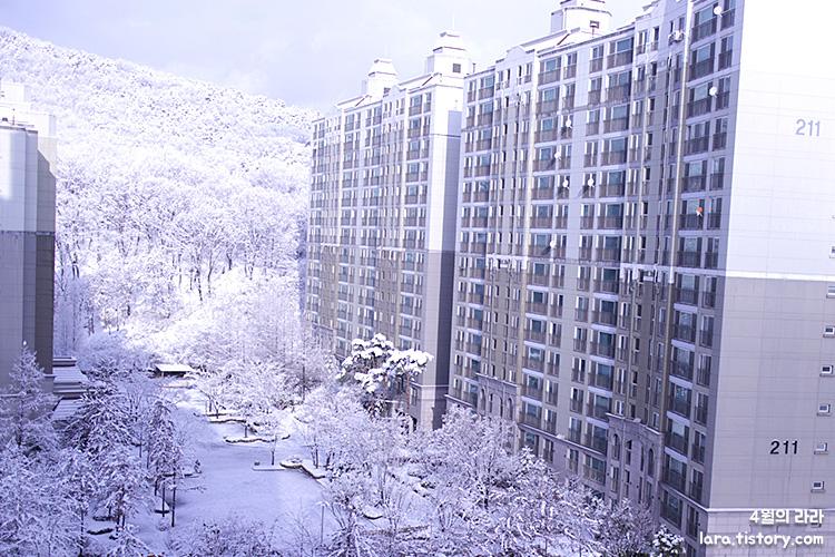 김장_백김치_석박지