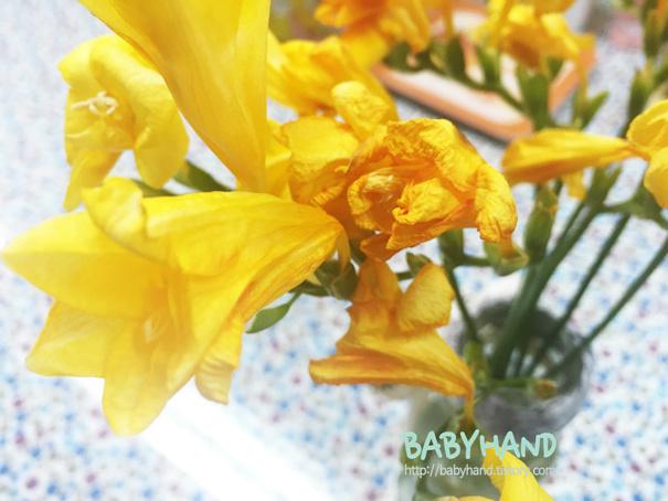 프리지아 꽃다발