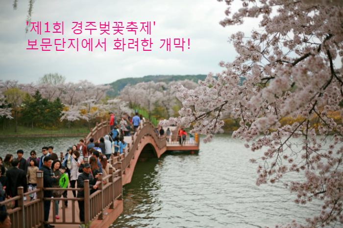 [경주벚꽃축제] 벚꽃명소 경주보문단지 화려한 개장!