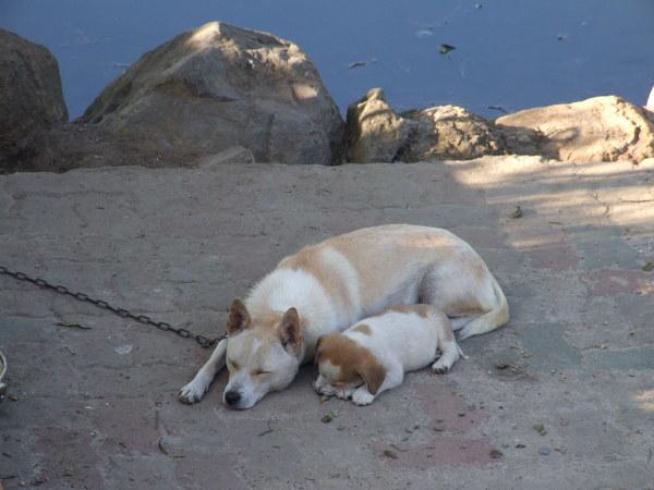 가나안 수양관 강아지