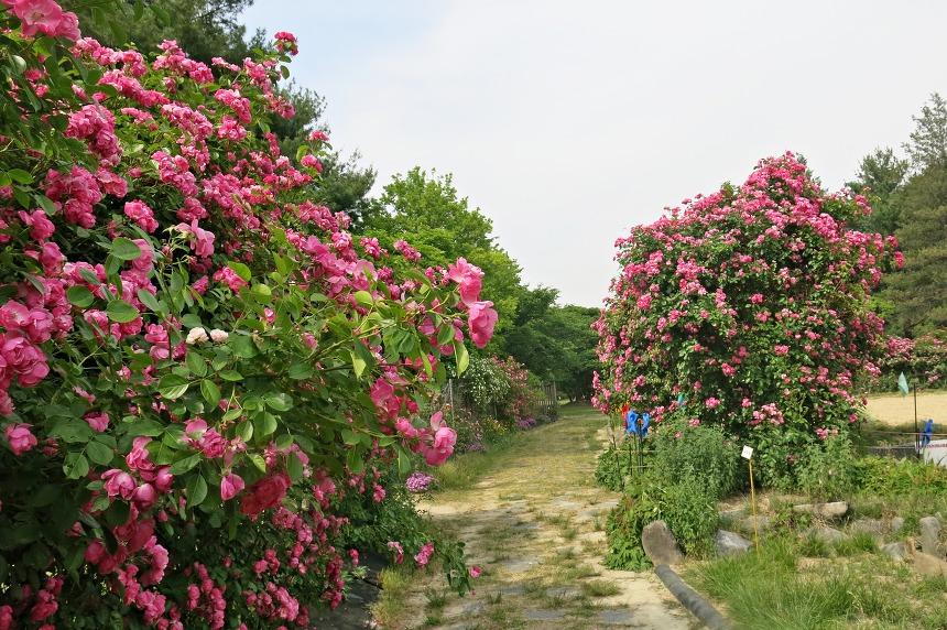 립대전현충원 야생화공원