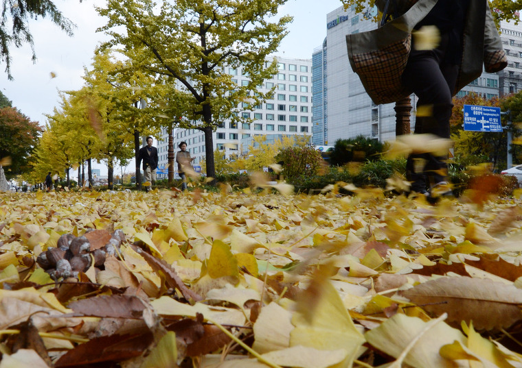 가을을 타다
