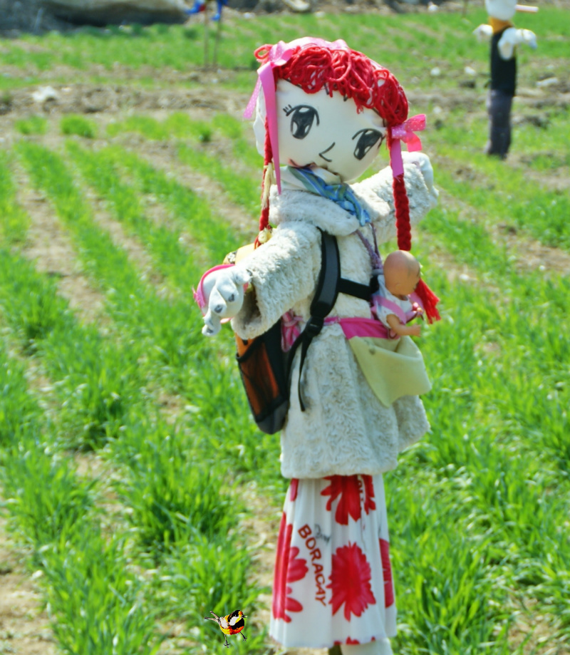 테마가 있는 허수아비,稻草人,scarecrow,かかし