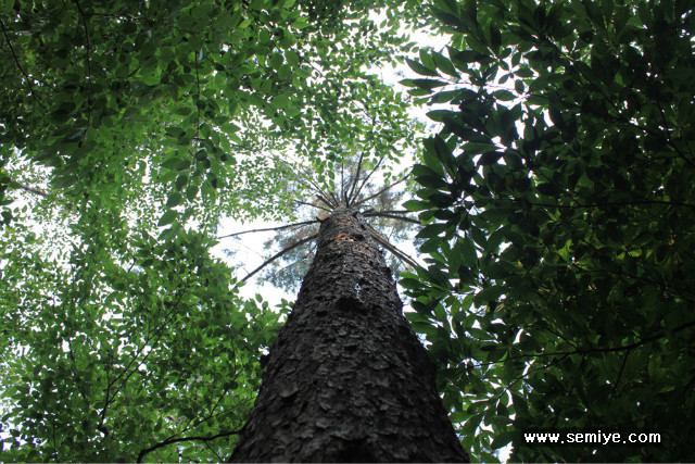 CO2-상수리나무-낙엽송-나무-환경-힐링-웰빙-건강-도토리나무-참나무-이산화탄소-다람쥐-도토리묵-CO2 배출총량-공해-환경-오염
