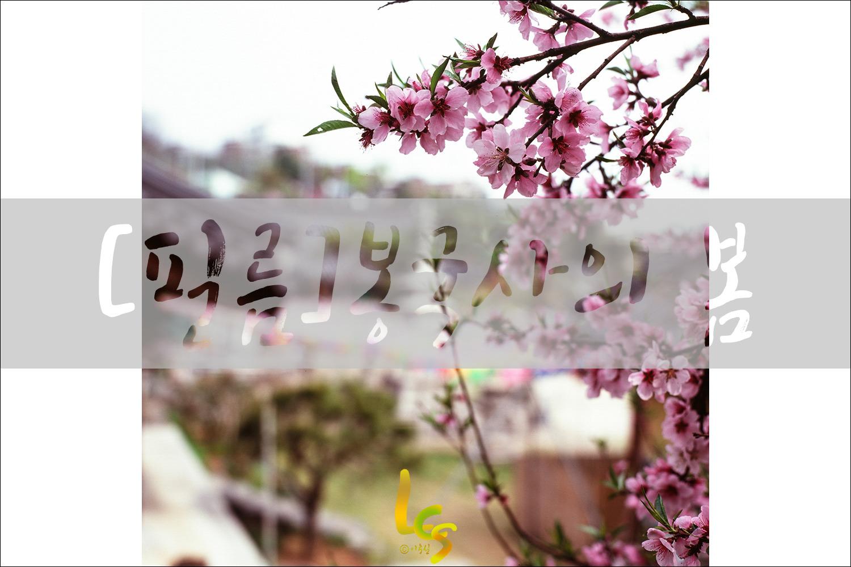 [필름]봉국사의 봄