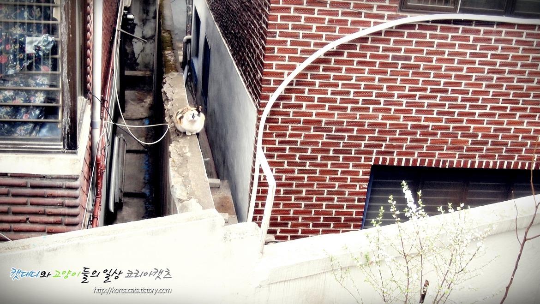 우리집 창문으로 찾아온 오랜만의 고양이