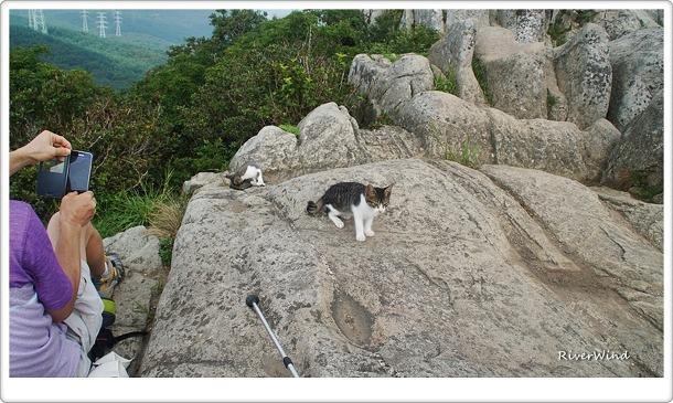 고당봉의 고양이들