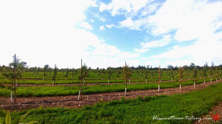 사과 나무 농장입니다