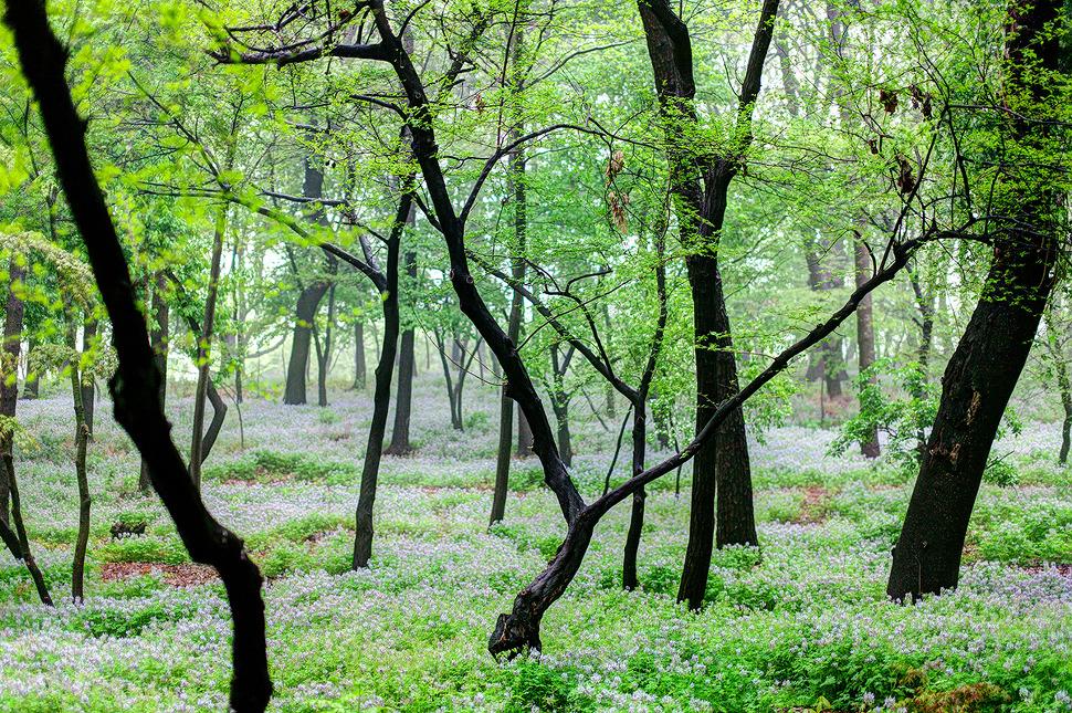 작은 바람에도 가지를 흔들며 신나 춤추는 나무들^^