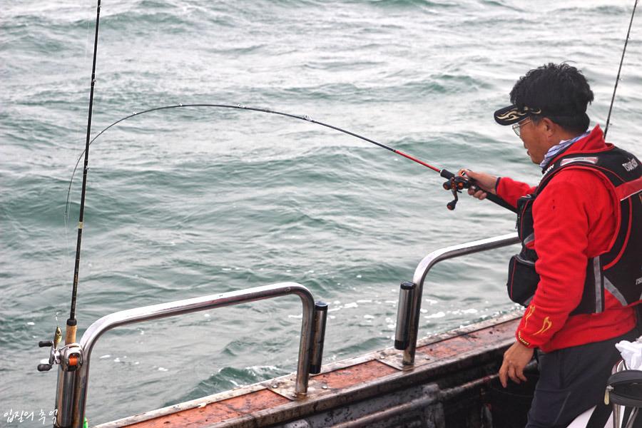 서해 갑오징어 낚시(2), 낚시에서 환상적인 갑오징어 회로 탈바꿈하기까지