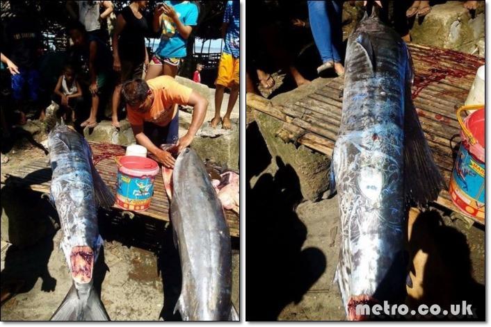 필리핀에서 희한한 문신 물고기 잡히다.