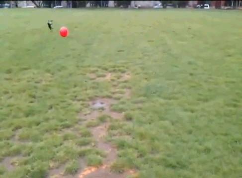 공이 너무 큰 강아지 2