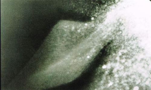 수중음파탐지 네시 지느러미