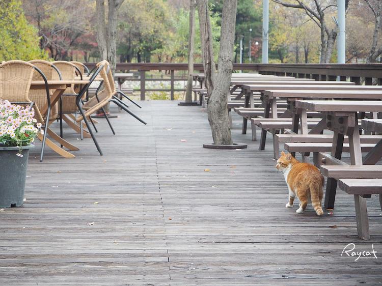 서울숲 매장 길고양이