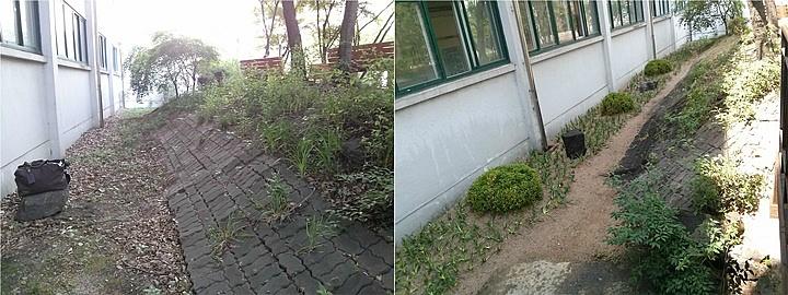 덕수고등학교 음지 식물