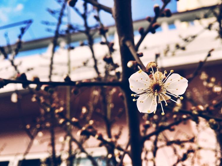 서귀포에 미리 찾아온 봄