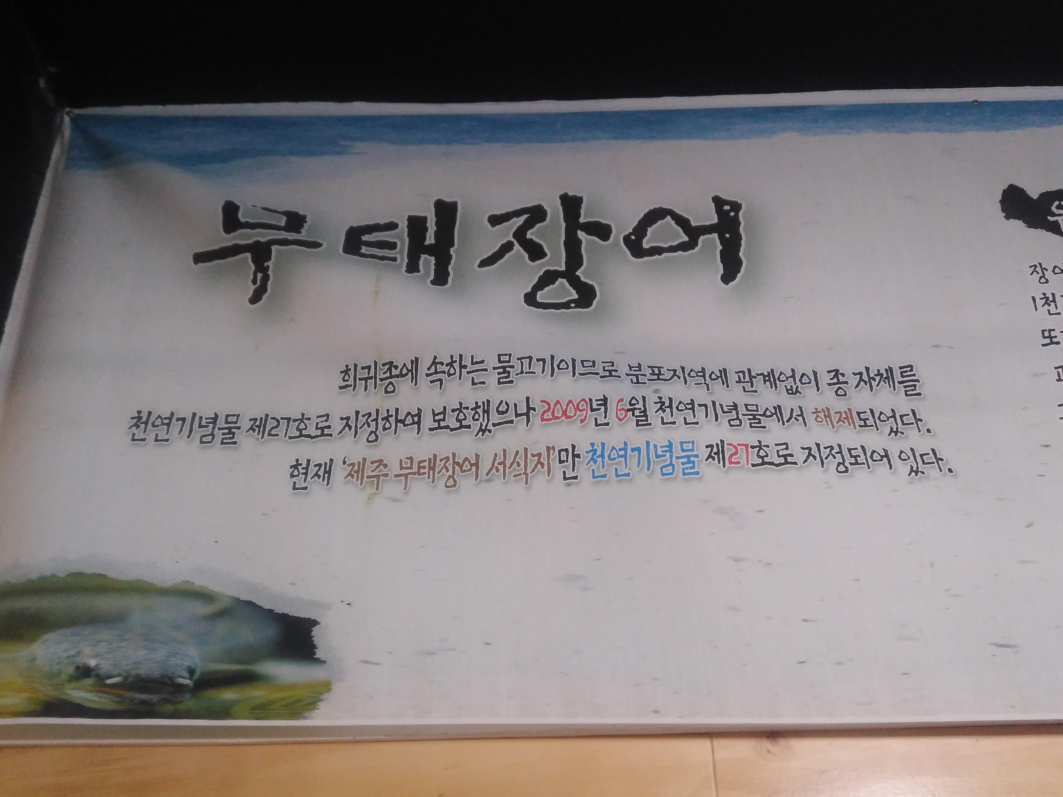무태장어 천연기념물 설명