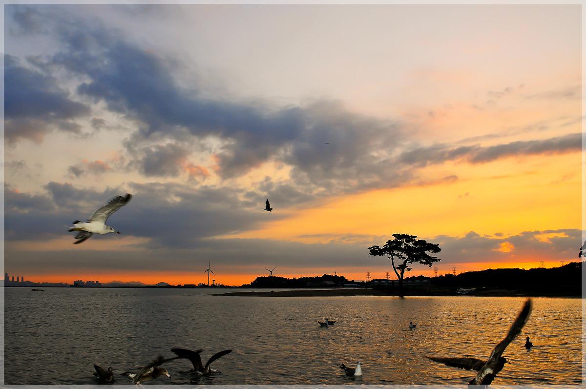 출근전 둘러본 새벽 풍경들. 대부도 미인송 그리고 두물머리