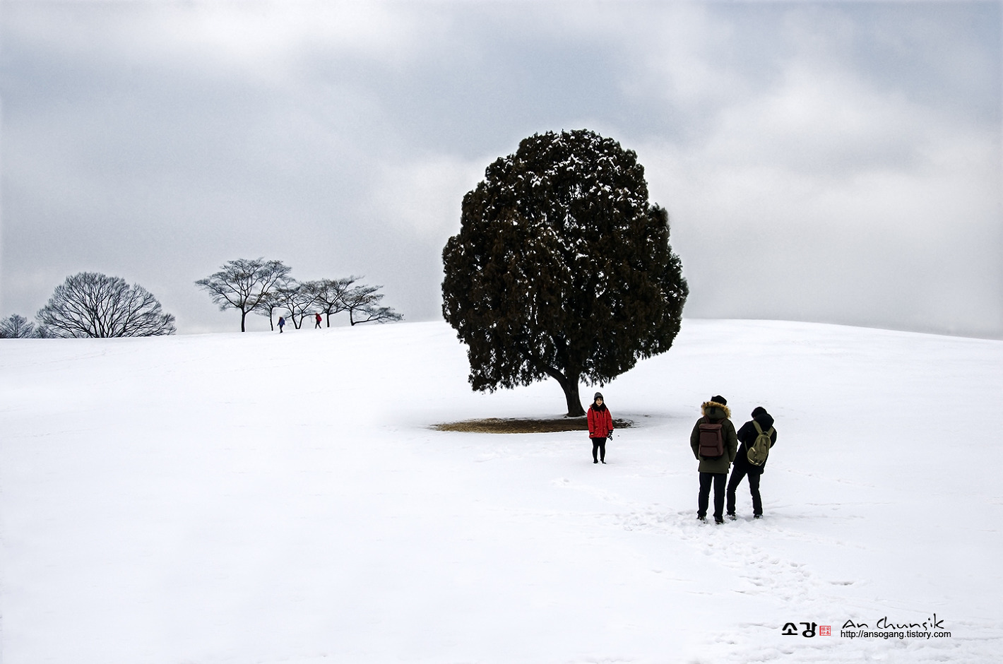 나홀로나무는 외롭지않다