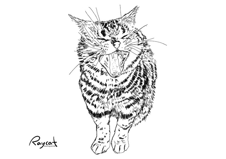고양이 그림 1년 스케치