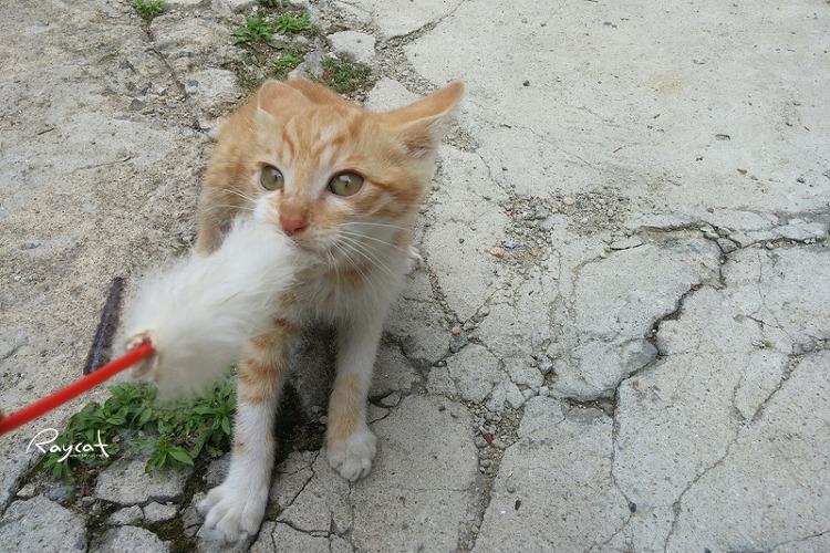 오뎅꼬지 당기는 고양이
