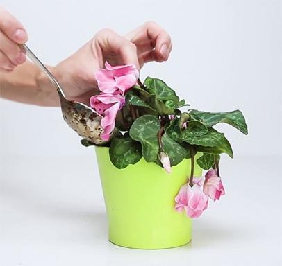 홈가드닝 식물영양제