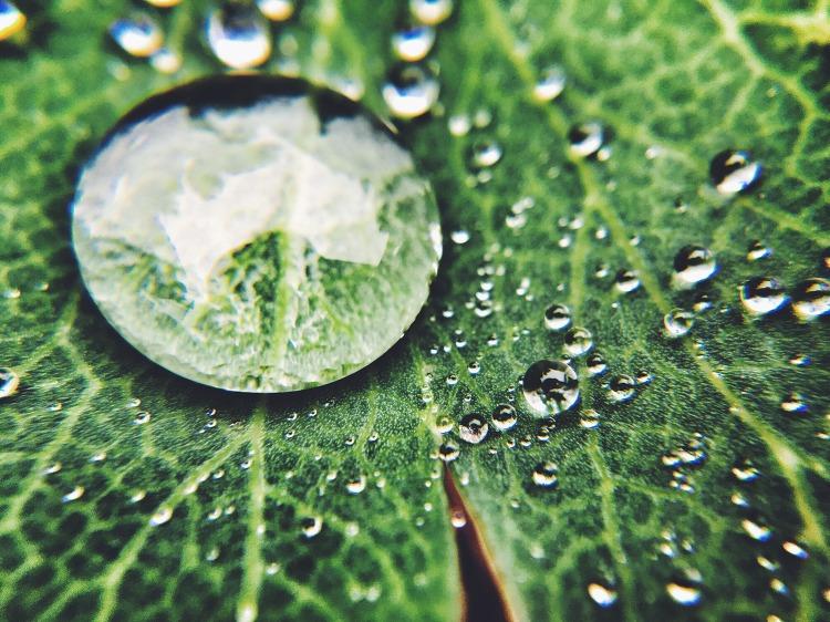 초록이 방울방울