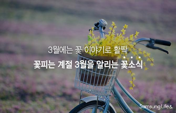 자전거 개나리 봄꽃 3월