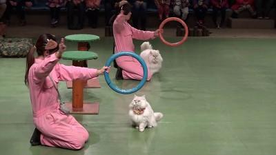 일본 고양이 서커스