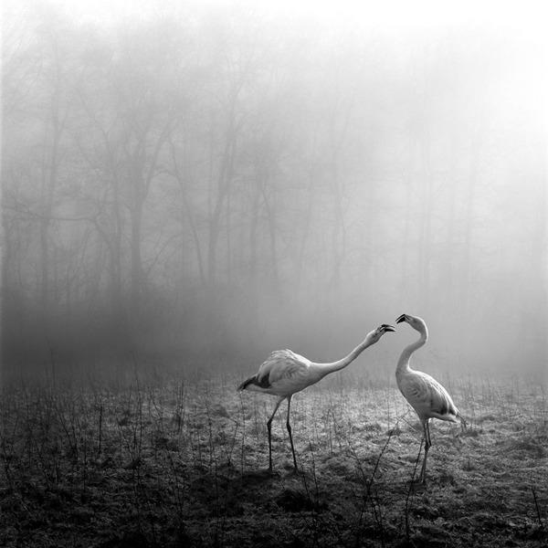 포토샵으로 자유가 된 동물들15