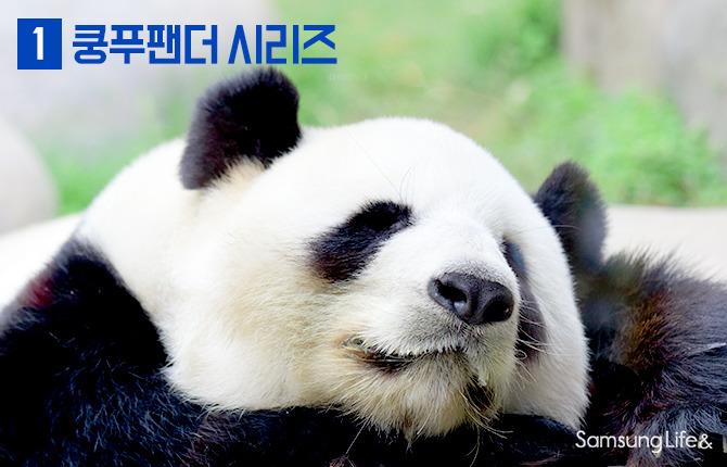 팬더 잠 쿵푸팬더 사진