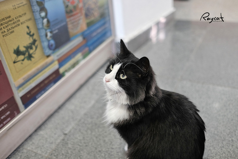 블라디보스토크에서 만난 애교쟁이 길고양이들